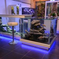 Aqua Art Design : le monde des poissons